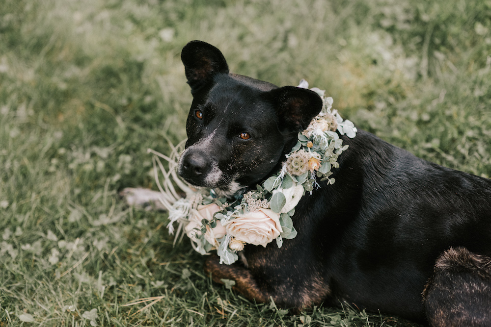 Dog laying in grass with a floral circle around its neck.
